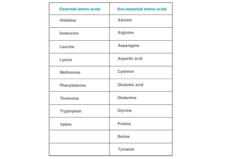 Essential and non essential amino acids 1cupofberries